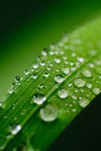 green, water, leaf